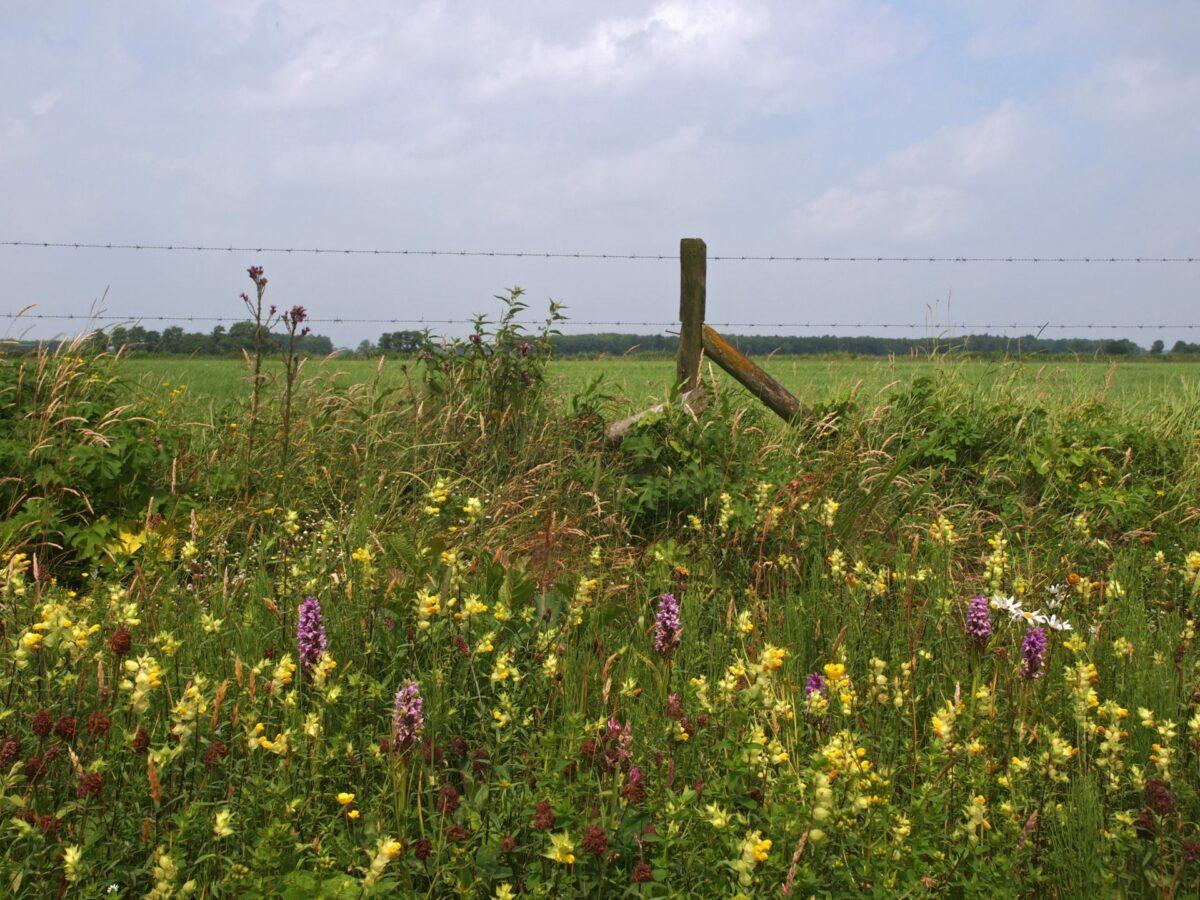 Bermbeheer dat bijdraagt aan biodiversiteit