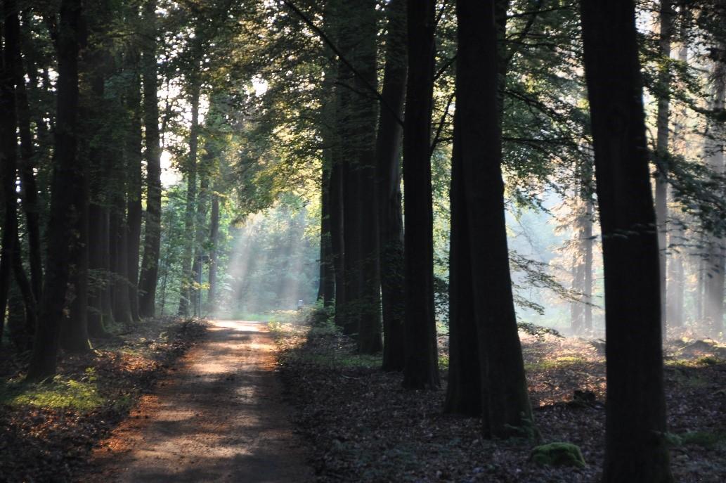Door de bomen het bos.......