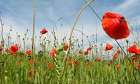 'Achteruitgang insecten in Nederland is zorgelijk,' concludeert minister