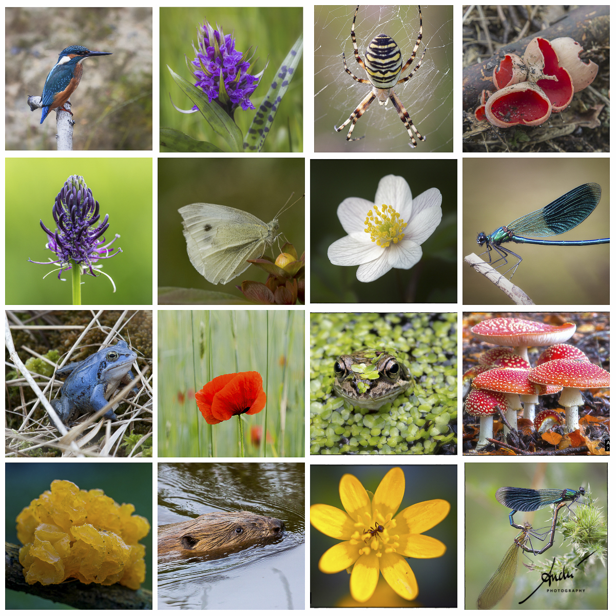 Biodiversiteit en Biodiversitijd