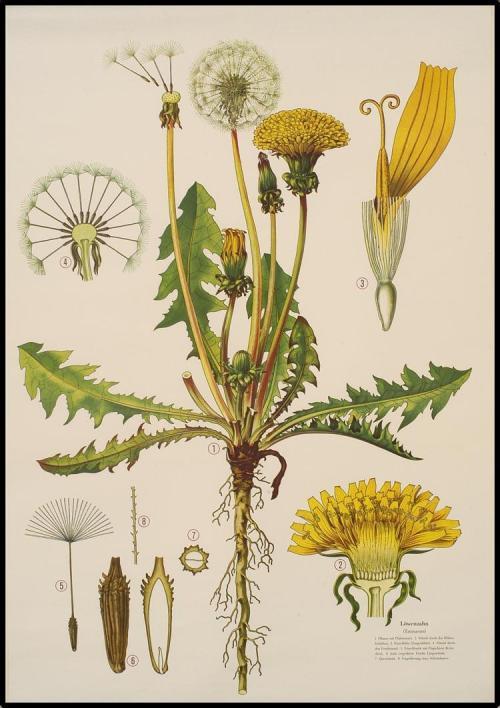 Nieuw dit voorjaar: Basiscursus Flora online
