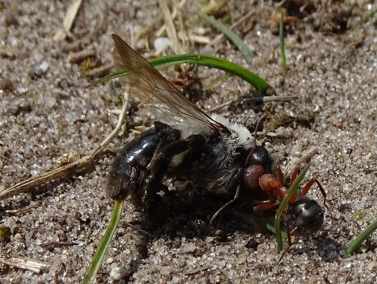 Mieren met excuus